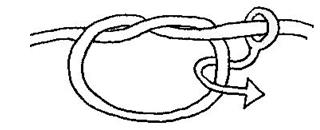capucin1