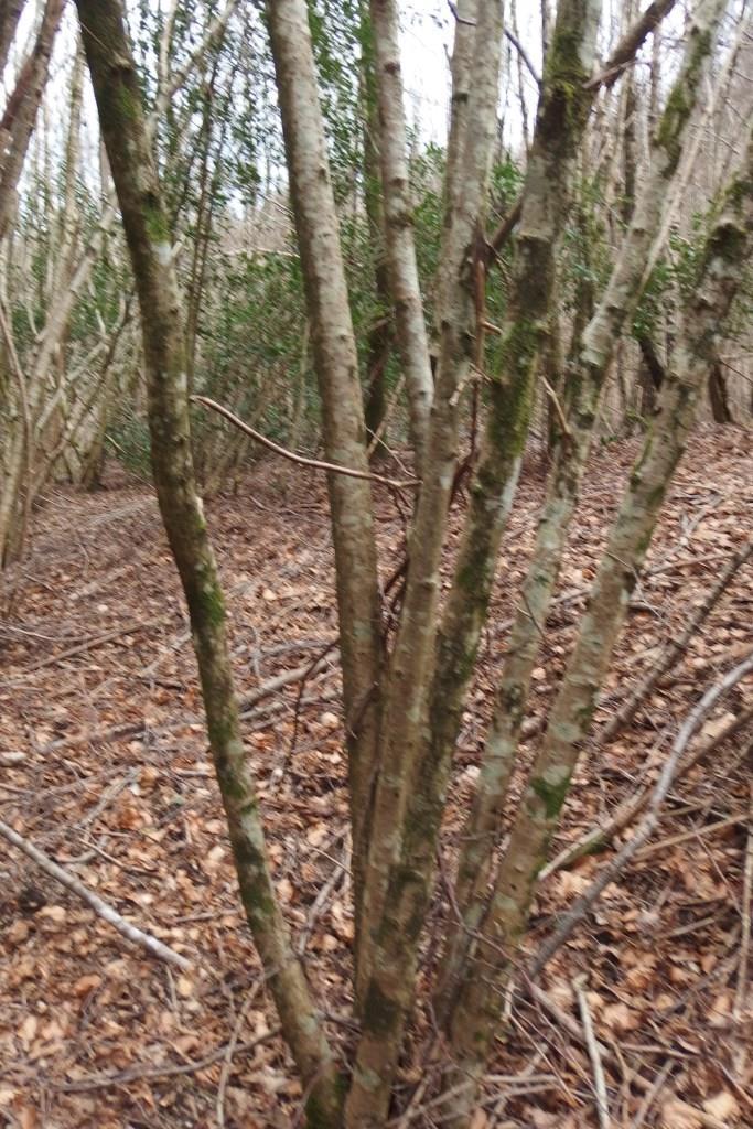 Quels bois choisir - Arbre fruitier comme bois de chauffage ...