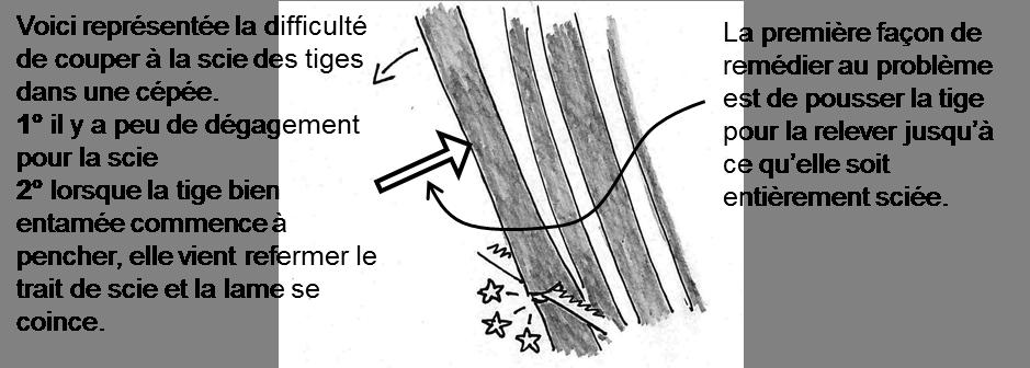 coper des arbres-3